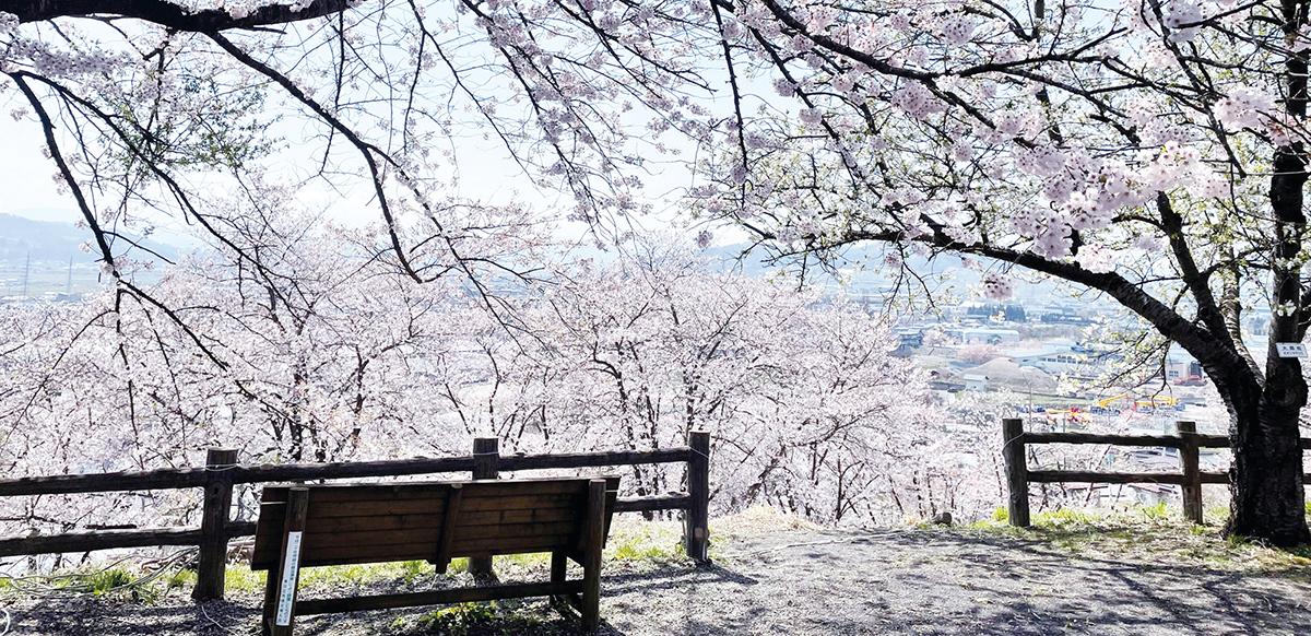 寒河江公園 桜とベンチ