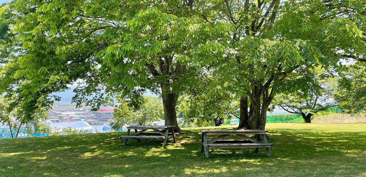 寒河江公園 木々とベンチ
